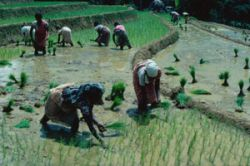 Agriculture is a major employer in countries like Sri Lanka