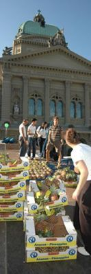 Fair Trade Fair: The world' s largest fruit mosaic made up of over 5000 fair trade pineapples is built up in front of the Swiss parliament.