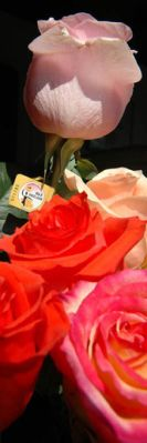 Max Havelaar Fair Trade roses from Ecuador